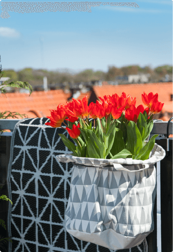 Create your own tulip oasis on your balcony